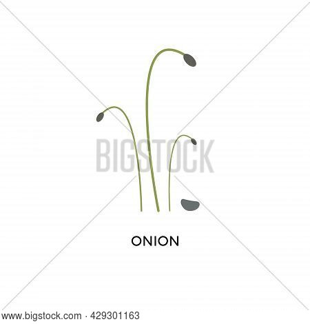 Onion Microgreens And Seed Vector Illustration. Superfood, Home Gardening, Greens. Can Be Used For T