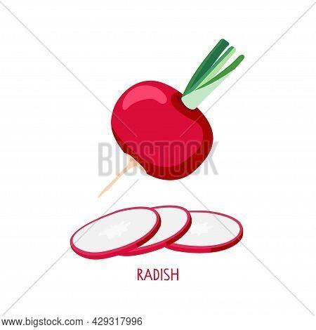 Radish Isolated On White. Whole Radish And Radish Slices. Farmer Market Logo. Vegetable Ingredient.