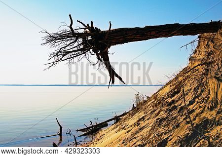 Fallen Pine Tree With A Bare Root System At The Edge Of A Cliff. Ecological Problem. Tree Root Syste