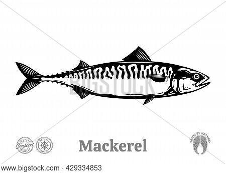 Vector Mackerel Fish Illustration