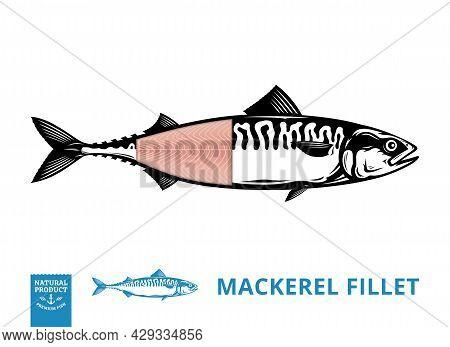 Vector Mackerel Illustration With Fillet