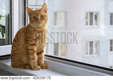 Close-up Of A Cute Ginger Tabby Kitten Sitting On A Windowsill With A Mosquito Net And Looking At Th