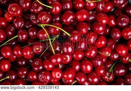 Garden Harvest Of Red Cherry Fruit Berries.