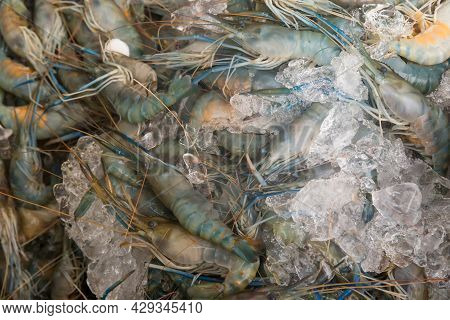 Fresh Seafood Part Animal From The Sea, River Shrimp With Iced On Tray. Fresh Seafood Giant Freshwat