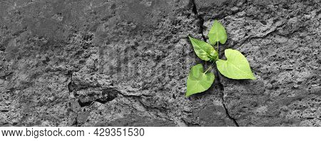 Ecology Concept And New Life Symbol As A Seedling Young Plant Overcoming A Difficult Environment Gro