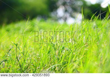 Nature Green Meadow Beautiful Summer Natural With Fresh Green Grass Bokeh Blur Background Bright Sun