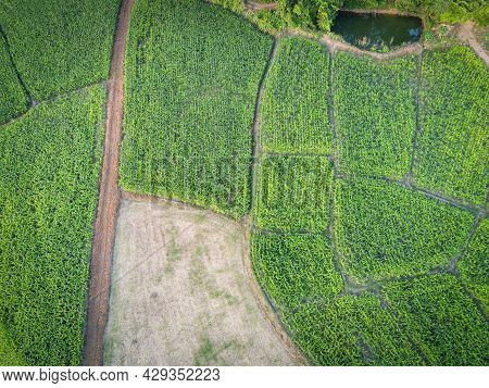 Aerial View Field Nature Agricultural Farm Background, Top View Corn Field From Above With Road Agri