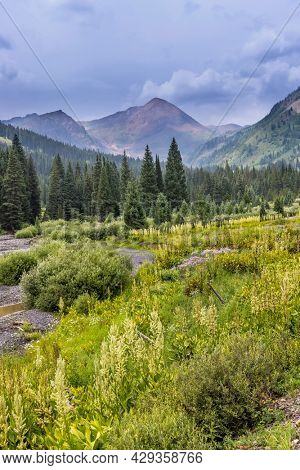 Scenic wildflower meadow by slate river along Lupine travel in Colorado