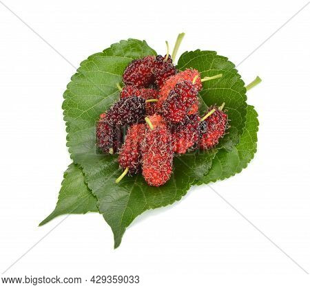 Morus ,mulberry And Mulberry Leaf Isolated On White Background
