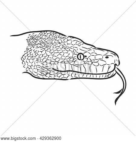 Black And White Sketch Of A Snake Snake Python Vector Sketch