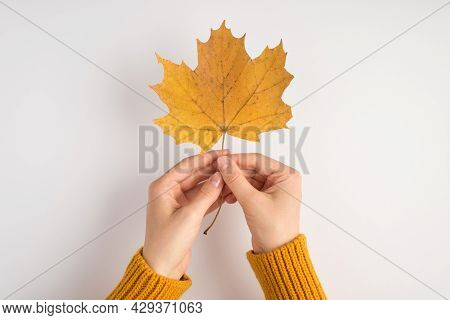 First Person Photo Of Female Hands In Yellow Pullover Holding Yellow Autumn Maple Leaf On Isolated W