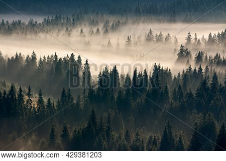 Misty Valley Scenery At Sunrise. Beautiful Nature Background With Coniferous Trees In Fog. Mountain