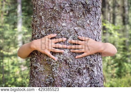 Tree hugging, little boy giving a tree a hug concept for love nature and conservation of environment