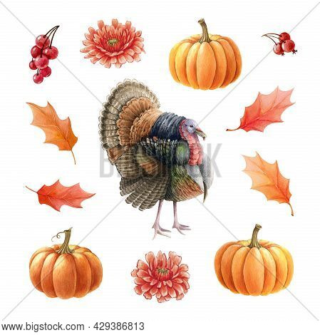 Turkey Bird, Pumpkins, Leaves, Berries Set. Watercolor Thanksgiving Illustration. Festive Autumn Dec