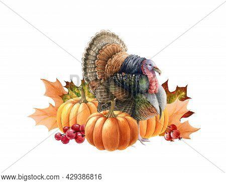 Turkey Bird With Pumpkins. Watercolor Thanksgiving Illustration. Festive Autumn Decoration. Turkey B