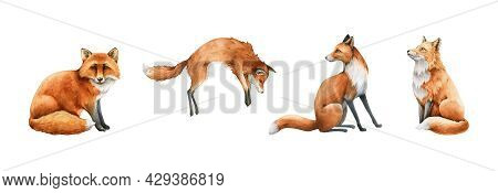 Fox Animal Set. Watercolor Illustration. Wild Cute Red Fox Collection. Wildlife Furry Animal With Re