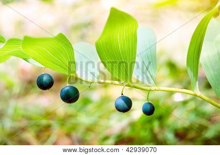 forest plant