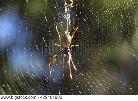 Close Up With A Spider. Australian Non Toxic Spider Crawling In Web Waiting For Victims To Fly In He