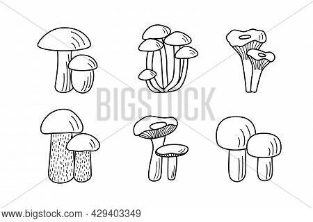 Set Of Mushroom Icons Vector. Illustration Of Boletus, Chanterelles, Honey Mushrooms, Champignons, A