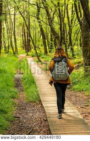 A Young Girl On The Wooden Footpath At Lake Paimpont In The Broceliande Forest, Ille-et-vilaine Depa