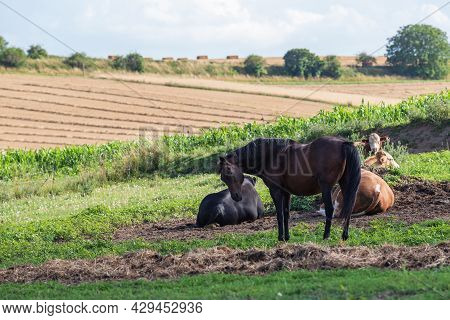 Fenced Enclosure For Animals In The Countryside. There Are Cows, Bulls And A Horse In The Paddock. T