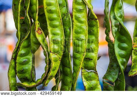 Parkia Speciosa Or Stink Beans Dangled Up For Display At The Front Of The Stall In Marketplace. The