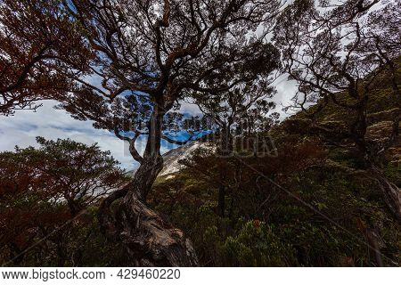 Climbing Mount Kinabalu, Sabah, Borneo, Malaysia. The Highest Mountain In South East Asia, Near The