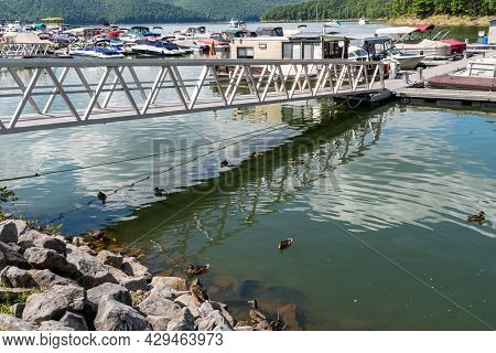 Glade Township, Pennsylvania, Usa August 3, 2021 Ducks Under A Metal Walkway Leading To Docks At The