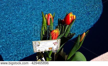 Congratulations On Your Menopause Tulips And Card