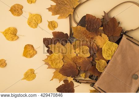 Top View Photo Of Open Leather Handbag With Scattered Yellow And Brown Autumn Leafage On Isolated Be