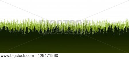 Pine Forest. Silhouettes Of Coniferous Trees. Wild Landscape Horizontally. Nice Panoramic View. Beau