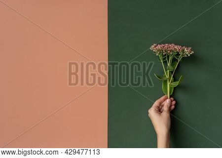 Beautiful Female Hands Hold Natural Flower. Concept.