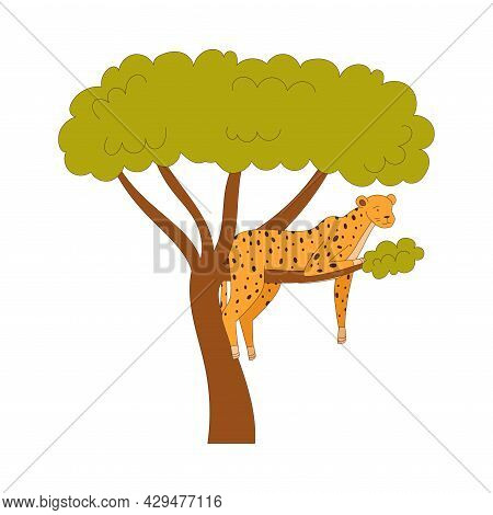 Spotted Cheetah Sitting On Tree Branch As African Animal Vector Illustration
