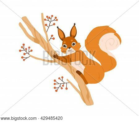 Cute Happy Squirrel On Rowan Tree Branch. Adorable Funny Animal With Fluffy Tail On Twig. Flat Vecto