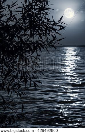 Full Moon, Lunar Path Over Sea Or River With Silhouette Of Tree. Night Moonlight Background