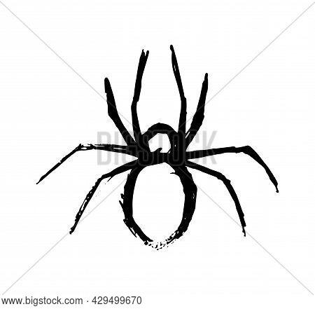Spider Vector Illustration On White Background Carelessly