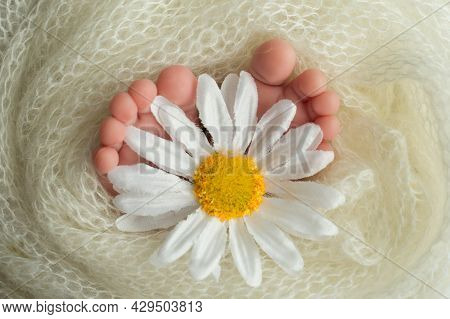 The Feet Of A Newborn Baby Are Wrapped In A Knitted Blanket. Fingers Of A Newborn Baby Are Holding A