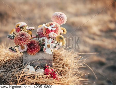 Still Life Photo Of Chrysanthemums Flowers In Small Rustic Style Wooden Box Lying On Armful Of Dry H