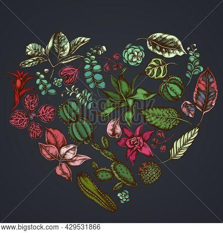 Heart Floral Design On Dark Background With Ficus, Iresine, Kalanchoe, Calathea, Guzmania, Cactus St