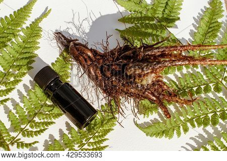 Extract From Leaves, Stems And Roots Of Wood Fern, Dryopteris Erythrosora. Male Fern Leaves And Root