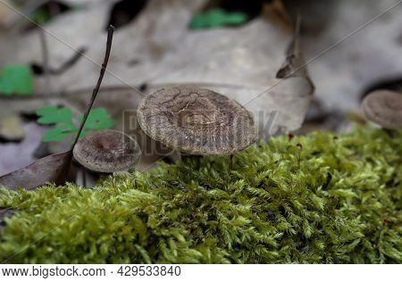 A Mushroom On The Forest Floor. Autumn Is Mushroom Season.