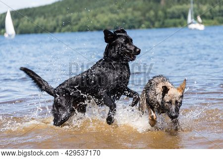 Dogs Play In The Lake And Have Fun In The Water - Dogs Playing