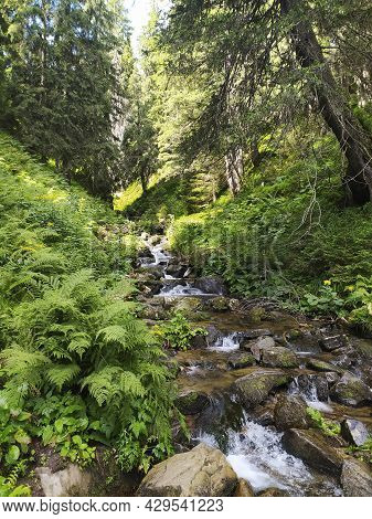 A Mountain Stream Flows Through Pines And Stones. Summer In The Mountain Forest. The Concept Of Recr