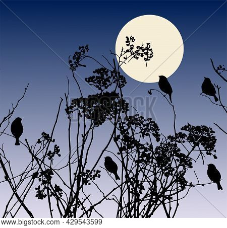 Abstract Nature Landscape With Silhouettes Birds Sitting On Dry Wildflowers In Moonlit Night
