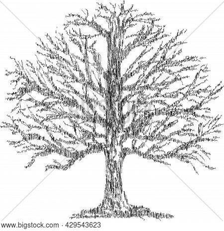 Contour Doodle Drawing Of Deciduous Old Bare Tree