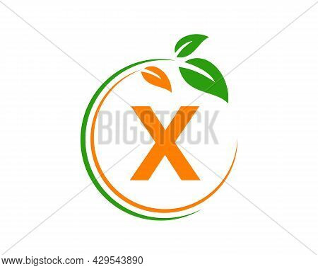 Eco Logo With X Letter Concept. X Letter Eco Healthy Natural Logo