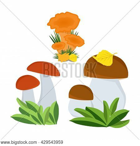 A Set Of Autumn Mushrooms. Chanterelles, White Mushroom, Red Mushroom. Applicable For Printing, Post