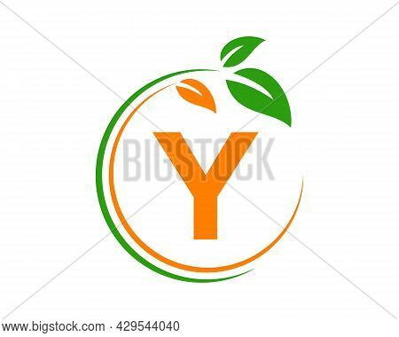 Eco Logo With Y Letter Concept. Y Letter Eco Healthy Natural Logo