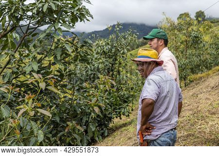 Two Farmers Inspecting Avocado Crop In The Mountains Of Colombia