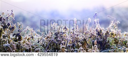 Frost-covered Grass In Winter Morning Against Sunlight